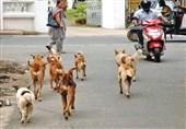 زن هندی از حمله 50 سگ وحشی جان سالم به در نبرد+عکس