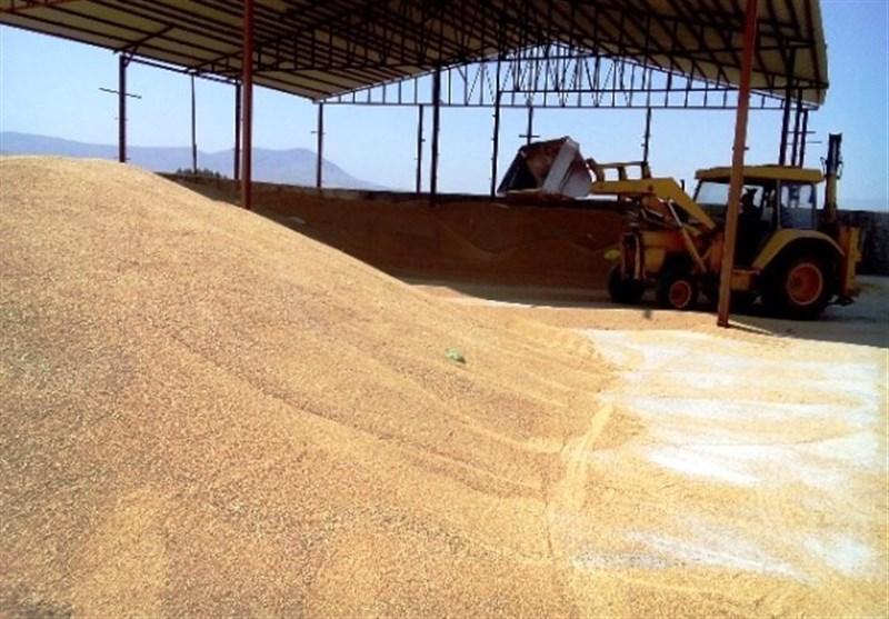 3 میلیون تن گندم مازاد باید از طریق بورس کالا صادر شود