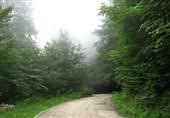 جنگل هیرکانی