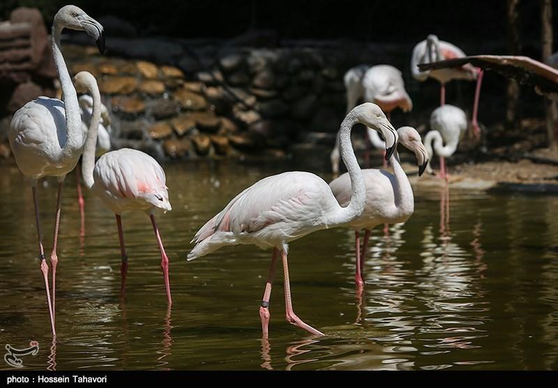 20 تصویر زیبا از باغ پرندگان تهران