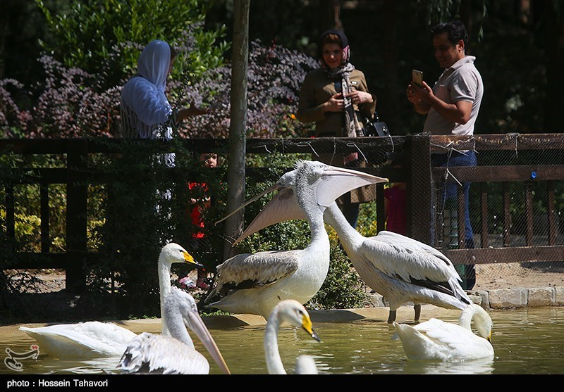 http://newsmedia.tasnimnews.com/Tasnim/Uploaded/Image/1395/06/03/139506031820039518470184.jpg