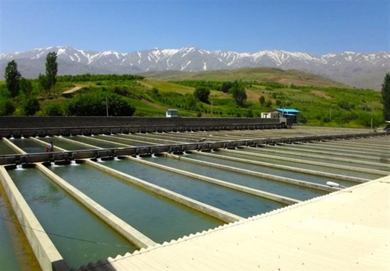 تعاونیهای تولید و پرورش آبزیان در اردبیل تشکیل میشود