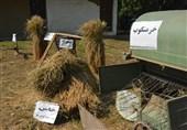 جشنواره برنج