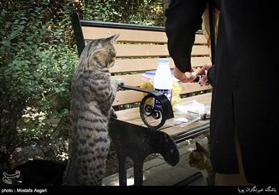 حمایت از گربه های پارک لاله