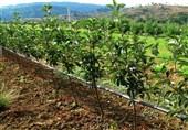 کمکاری دولت در مکانیزه سازی کشاورزی آذربایجان غربی
