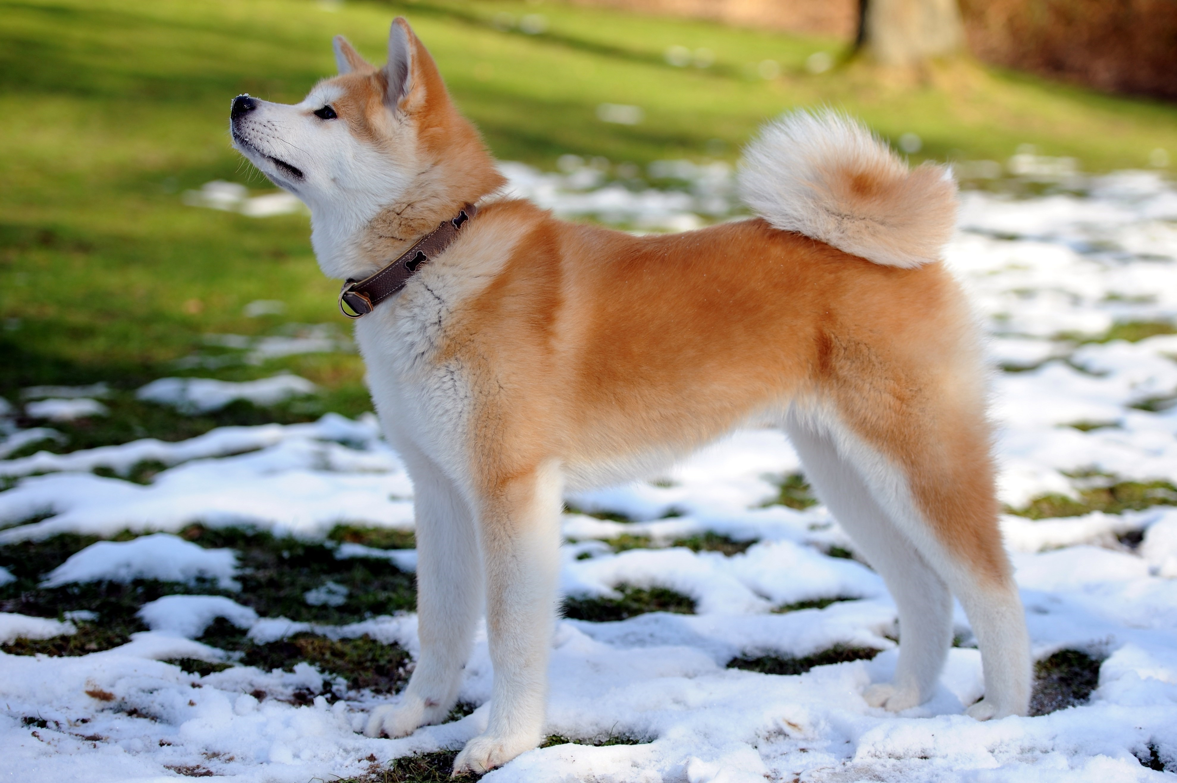 Image Result For Large Dogs That