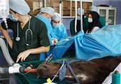 نخستین بیمارستان دامپزشکی سلامت شرق کشور افتتاح شد