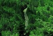 جنگل گیلان