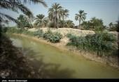 نخلهای ایرانی در دوره مسئولیت ابتکار به کویت و امارات منتقل شد/ بازیابی خاکهای صادر شده 1000 سال طول میکشد