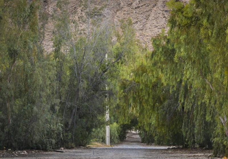 پارک جنگلی لار