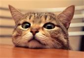 آیا خراش گربه، سرآغاز مرگ است؟