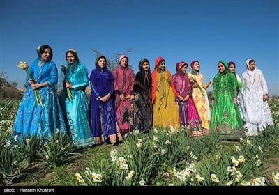 نرگس زار های منطقه کازرون در استان فارس