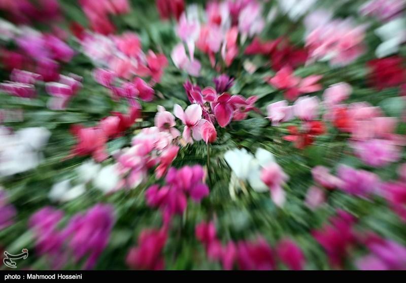 محموله گلهای زینتی قاچاق در استان مازندران متوقف شد