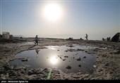 میهمانان دریاچه ارومیه