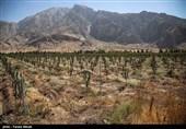 افتتاح بزرگترین باغ مدرن سیب در غرب کشور - کرمانشاه