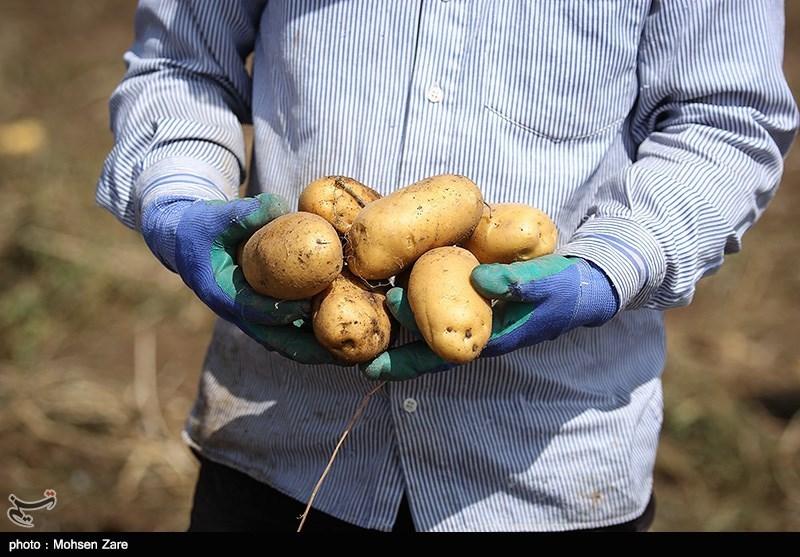 بسیاری از محصولات کشاورزی کشور بازار فروش ندارند