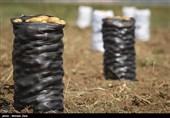 سطح کشت سیبزمینی در استان اردبیل به 19 هزار هکتار کاهش یافت
