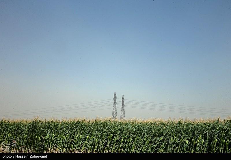 قیمت ذرت در ایران