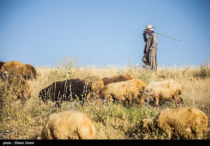 مسئولان برای کاهش قاچاق دام در جنوب استان کرمان تلاش کنند