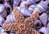 استفاده از صدفهای دریای خزر برای درمان نواقص استخوانی