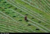 270 میلیارد ریال غرامت به کشاورزان خسارتدیده استان اردبیل پرداخت شد