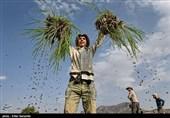 استفاده تبلیغاتی روحانی از پرداخت مطالبات کشاورزان + سند