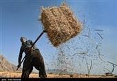کشاورزان متضرر از خشکسالی در شهرضا تسهیلات ویژه دریافت میکنند