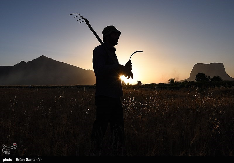 ناکامی خصوصیسازی در بزرگترین واگذاری بخش کشاورزی