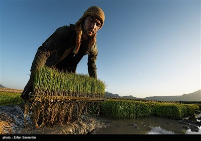 Traditional Non-Mechanized Agriculture in Iran's Fars Province