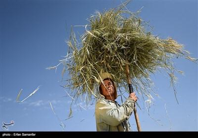 کشاورزی سنتی در فارس