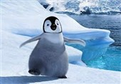 رژه تک نفره پنگوئن