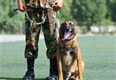 سگ پلیس سپکا