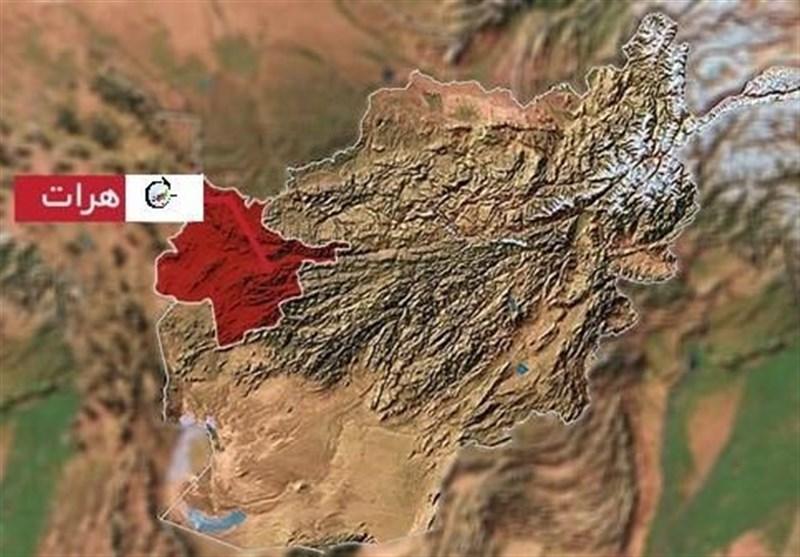 عملیات مشترک نظامی در هرات/ چند فرمانده طالبان و ارتش افغانستان کشته شدند