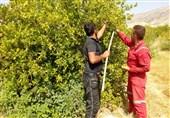 بازار لیمو ترش در گچساران و باشت کام باغداران را تلخ کرد / جولان دلالان و بیتفاوتی جهاد کشاورزی