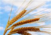 جزئیات برنامه دقیق و عملیاتی افزایش 5 برابری تولید کشاورزی