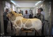 باغ موزه ملک