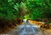 روستای توده زن