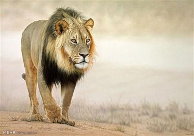 نقاشیهای فوق العاده از حیوانات