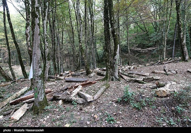 30 سال دیگر جنگل از ایران حذف میشود
