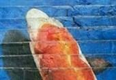 نقاشی سه بعدی زیبا برروی پله -هند
