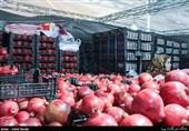 برداشت انار 290 میلیارد ریال نصیب کشاورزان کاشانی کرد