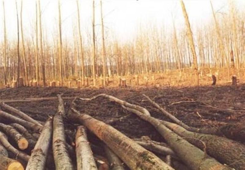 """""""تنفس جنگلها"""" 4 سال عقب افتاد"""