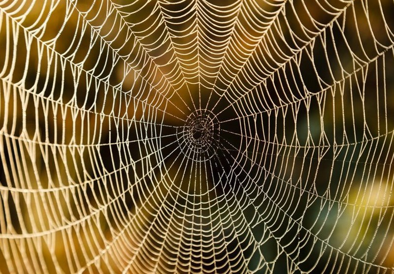 Catching Tumor in A Spider's Web