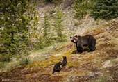 حیوانات کوهستان