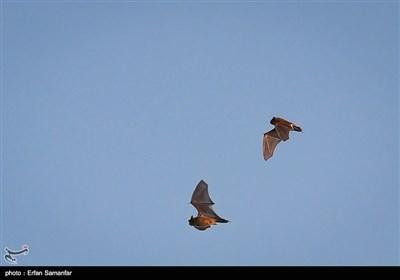 ایران میں پرندوں کے قومی دن کی مناسبت سے