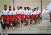 دوره ی آموزشی سگ های امداد و نجات - اصفهان