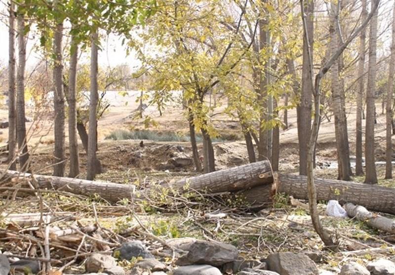 درختان دره مرادبیگ همدان
