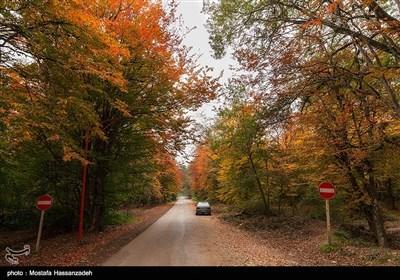 Autumn in Iran's Golestan Province