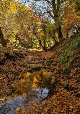 طبیعت پاییزی استان گلستان