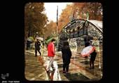بارش برف و باران در تهران